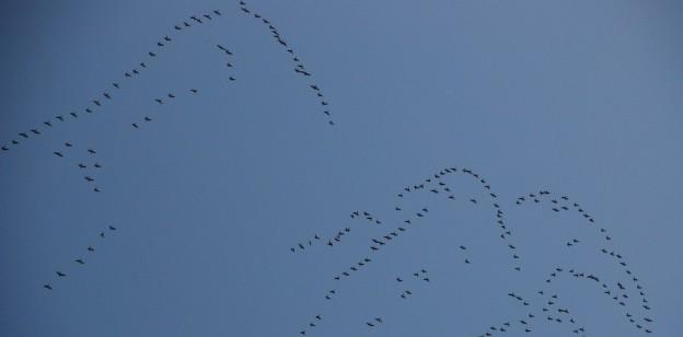 A cool flock of birds flew overhead.